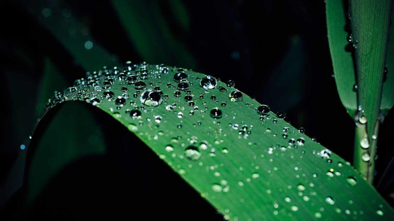 raindrops-1-1280x720.jpg